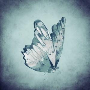 butterfly-718291