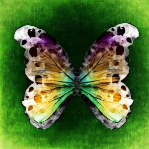 cropped-butterfly-767763.jpg